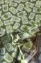 """Ткань """"Herb Garden"""" ярлычки на зеленом"""